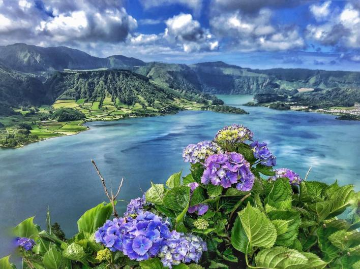 Hydrangeas bloom in front of a volcanic mountain lagoon in Sete Cidades, São Miguel Azores
