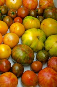 Stripe Heirloom Tomatoes