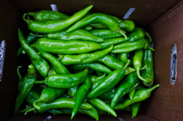 NuMex Joe Parker Peppers