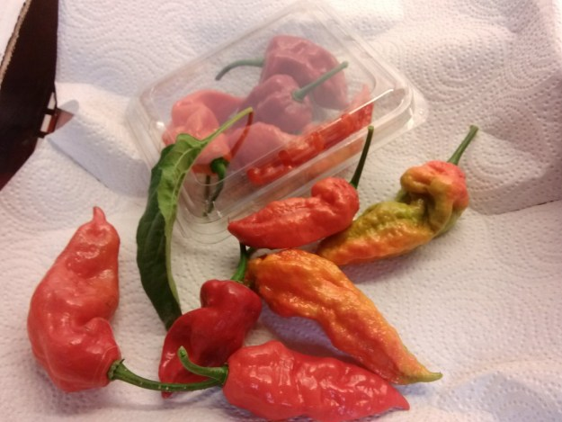 Package of Ghost Peppers - Bhut Jolokia