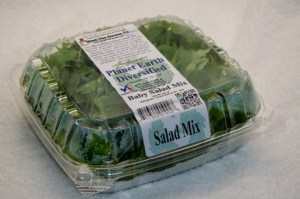 2016csa_summer_sept_10-baby-salad-mix