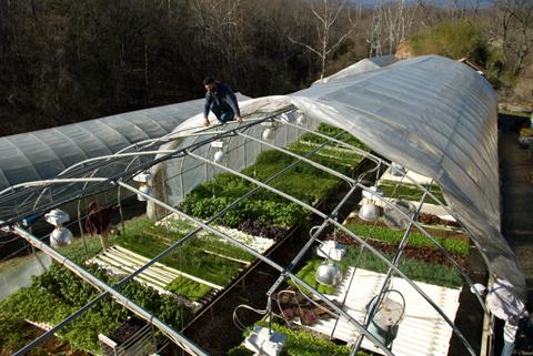 greenhouse plastic change