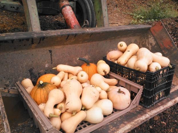 bucket-load-squash