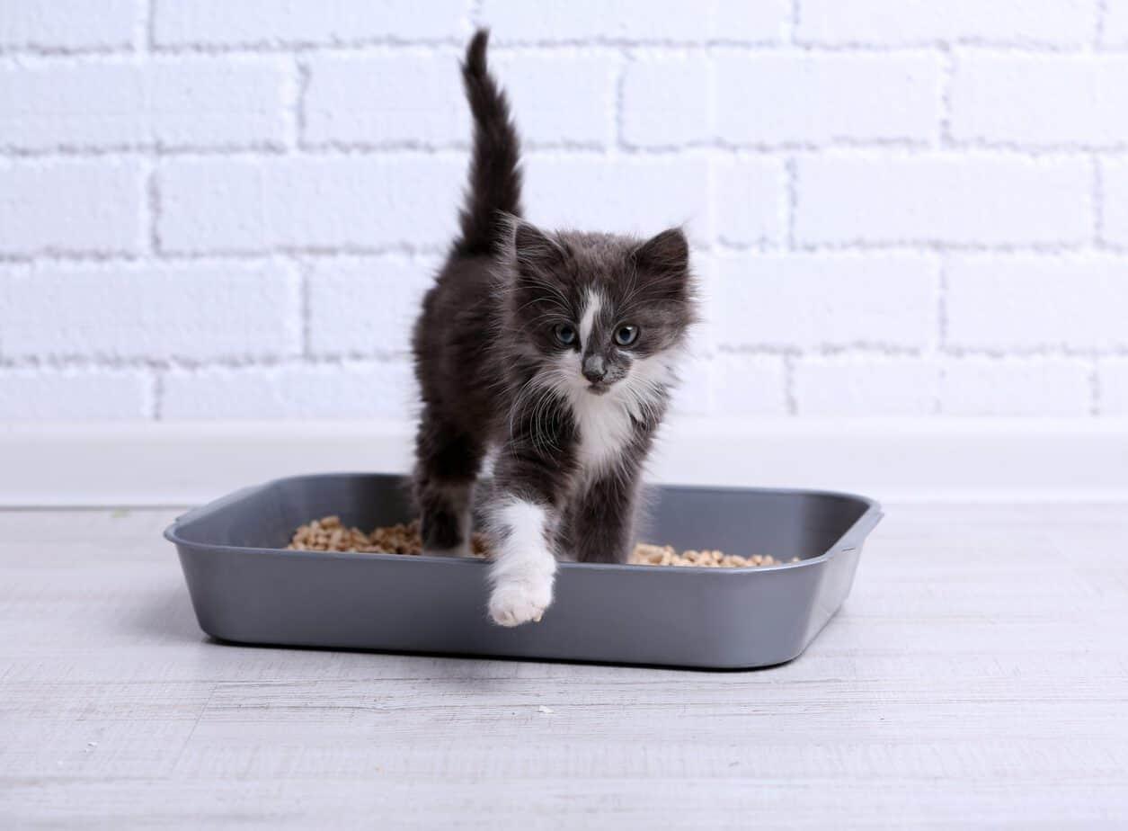 Cat Litter Box Odor