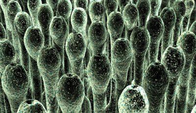 Mold Spores Image