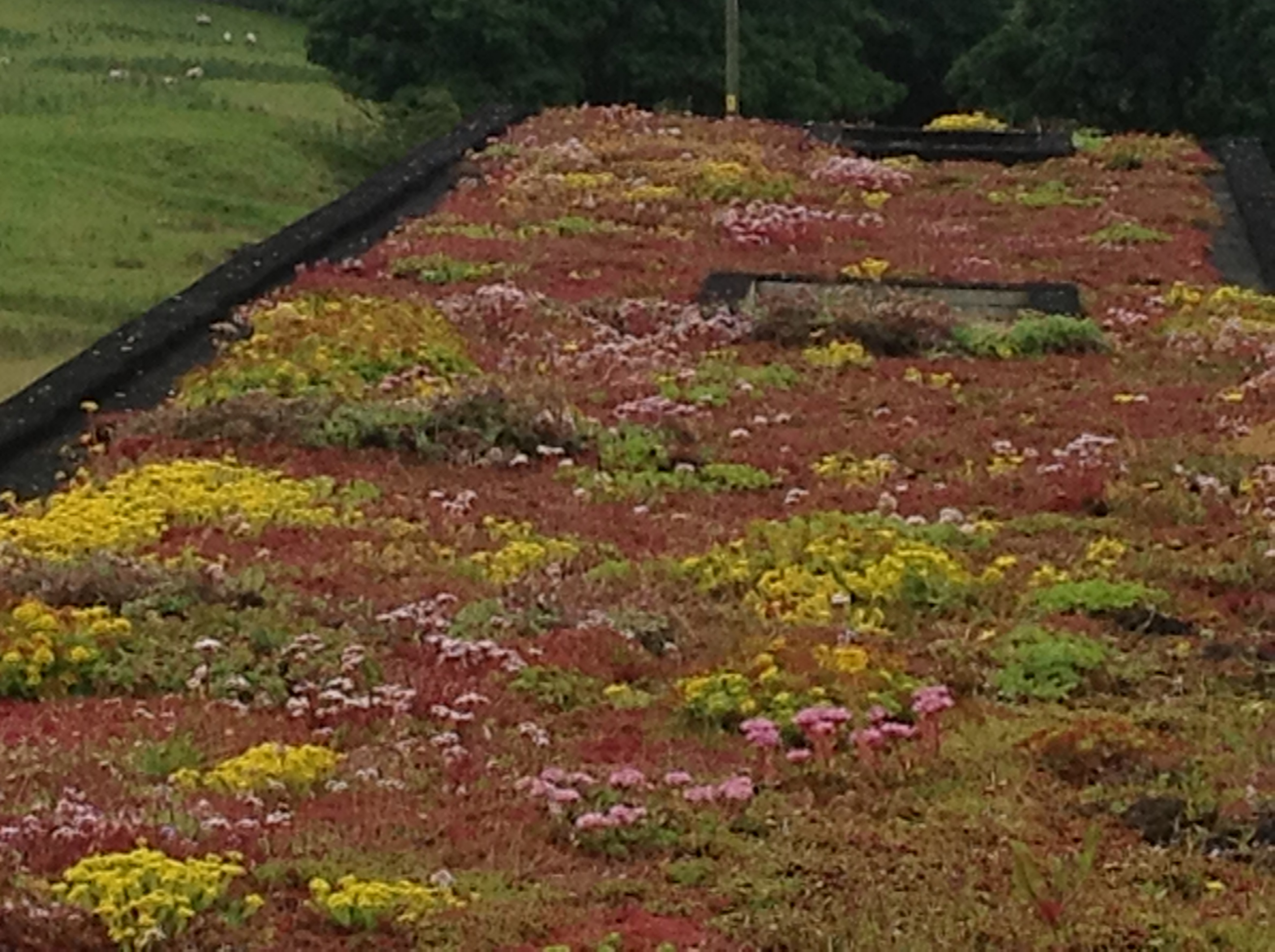 New Planning Guidelines Make Green Roofs A Quot No Brainer