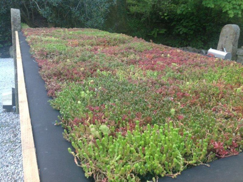 Green Roof Maintenance