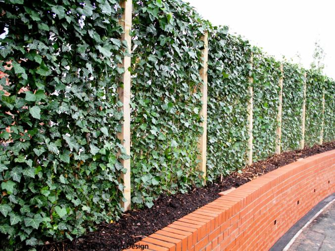 houghton Street Ivy Wall