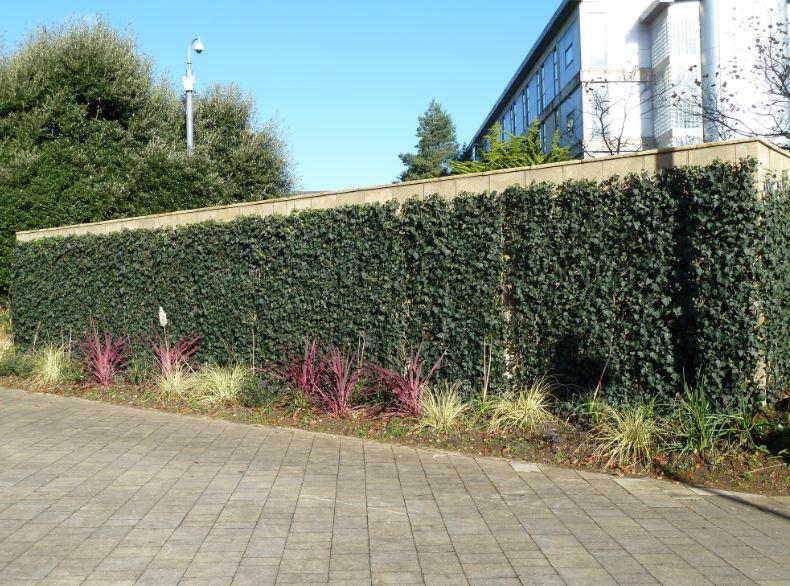 Greening the urban environment