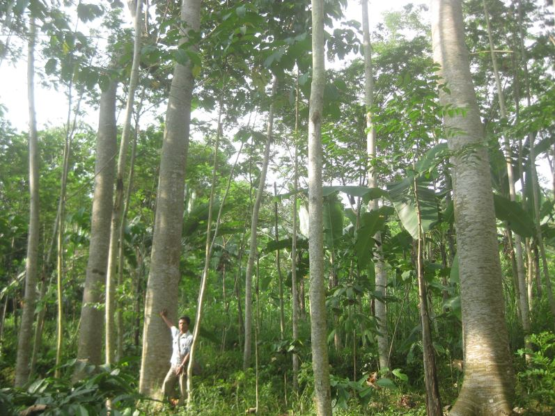 James Latham applauds one billion tree planting initiative