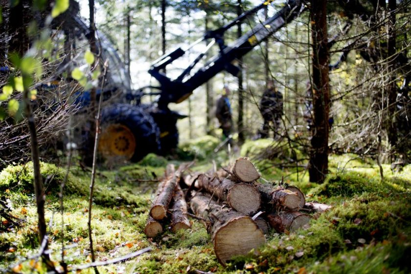 sustainable timber