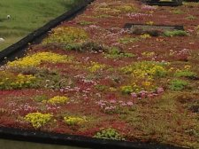 The Secrets of a Sedum Roof