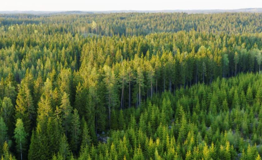 Better forest management means better timber