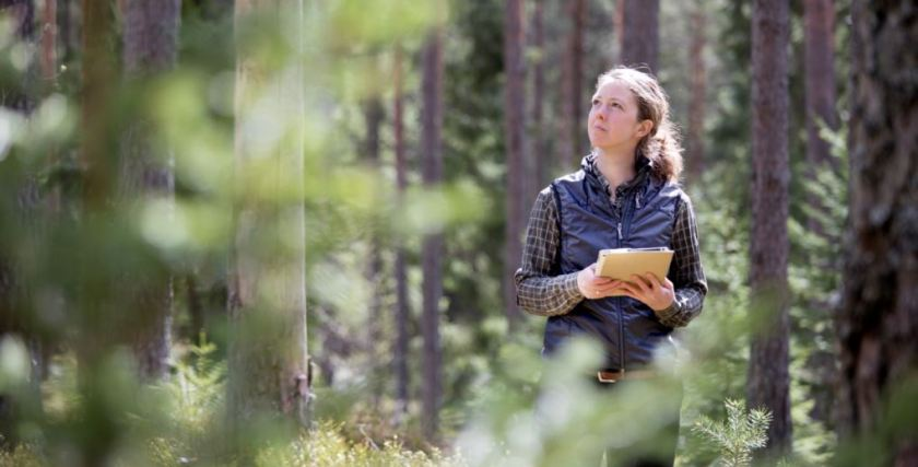Better forest management means better timber 3