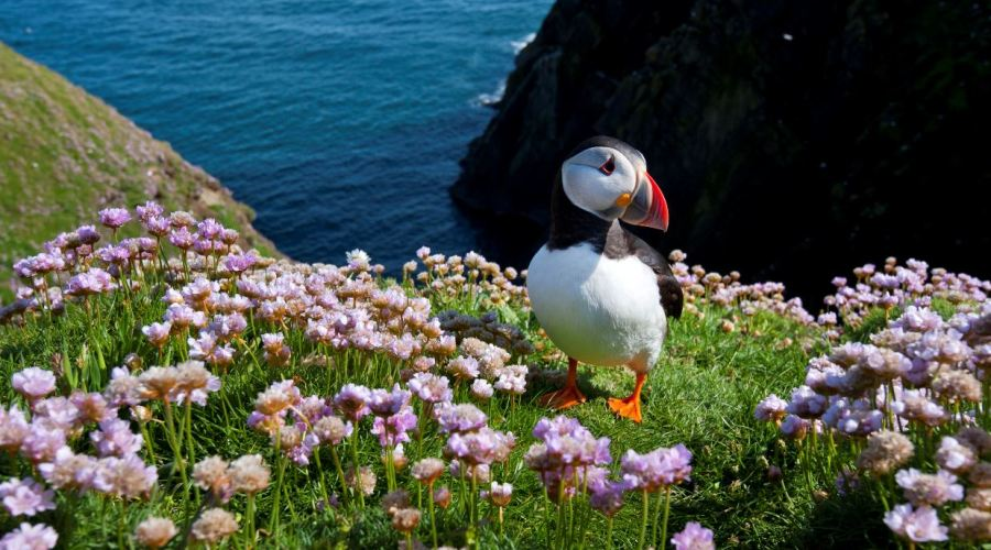 The Wildlife Trusts - Puffin