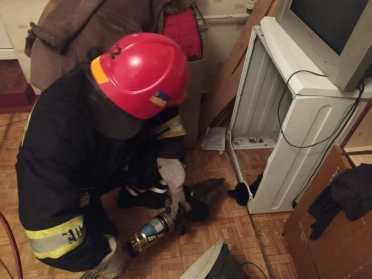 У Вараші рятувальники звільнили цуценя з пральної машини