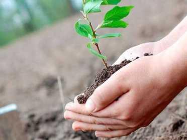 На Млинівщині розпочалися посівні роботи
