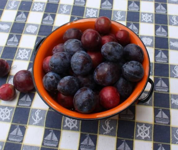 Prune Plums and Red Plums