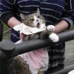railcat