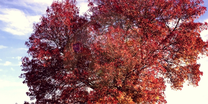 If an autistic person were a tree: visualising autism & an autistic individual's 'being'