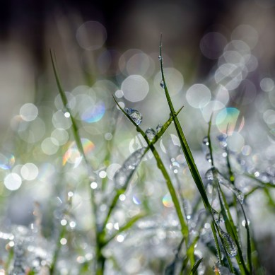 """Macey Sigaty - """"The Miracle of Dew"""""""