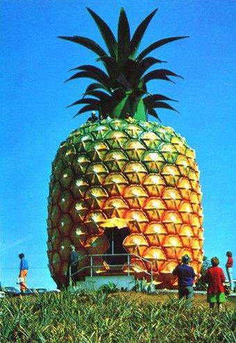 pineapple-baldness