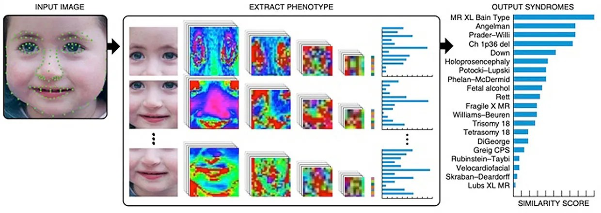 Heat map illustrating facial supplies that influence the algorithms' predictions