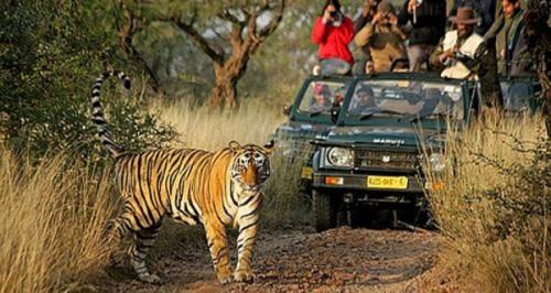 Dudhwa wildlife tour, Dudhwa tiger reserve, Dudhwa national park, Dudhwa  tour packages, Dudhwa wildlife sanctuary