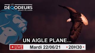 Un Aigle Plane… – 22/06/2021