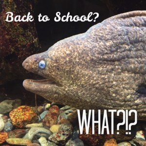 back to school fish what?