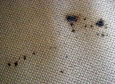Image Result For How Do You Get Red Juice Stains Out Of Carpet