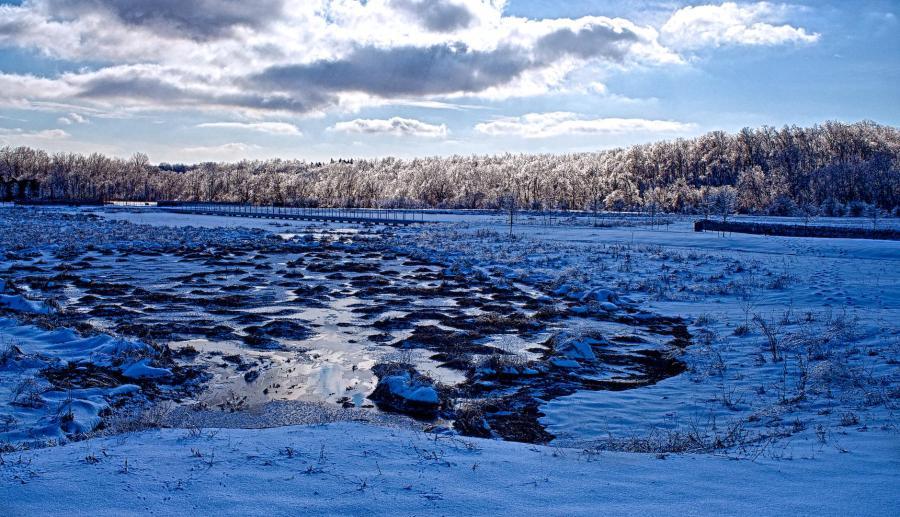 Frozen Wetlands in The Parklands of Floyd's Fork