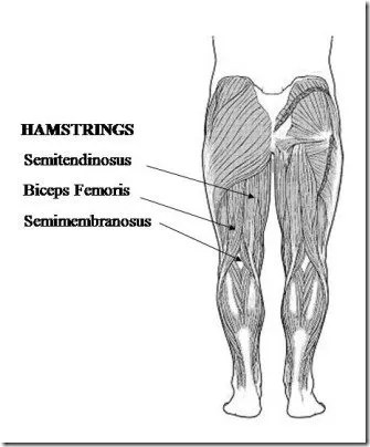 How to Recover a Hamstring Pull: Eccentric Loading