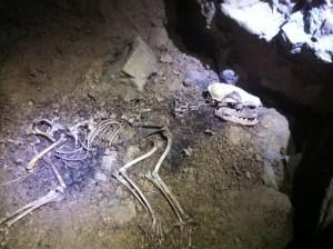 Grotte du Chat