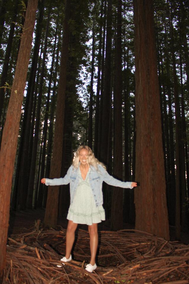 Dreaming of elsewhere warburton redwood forrest