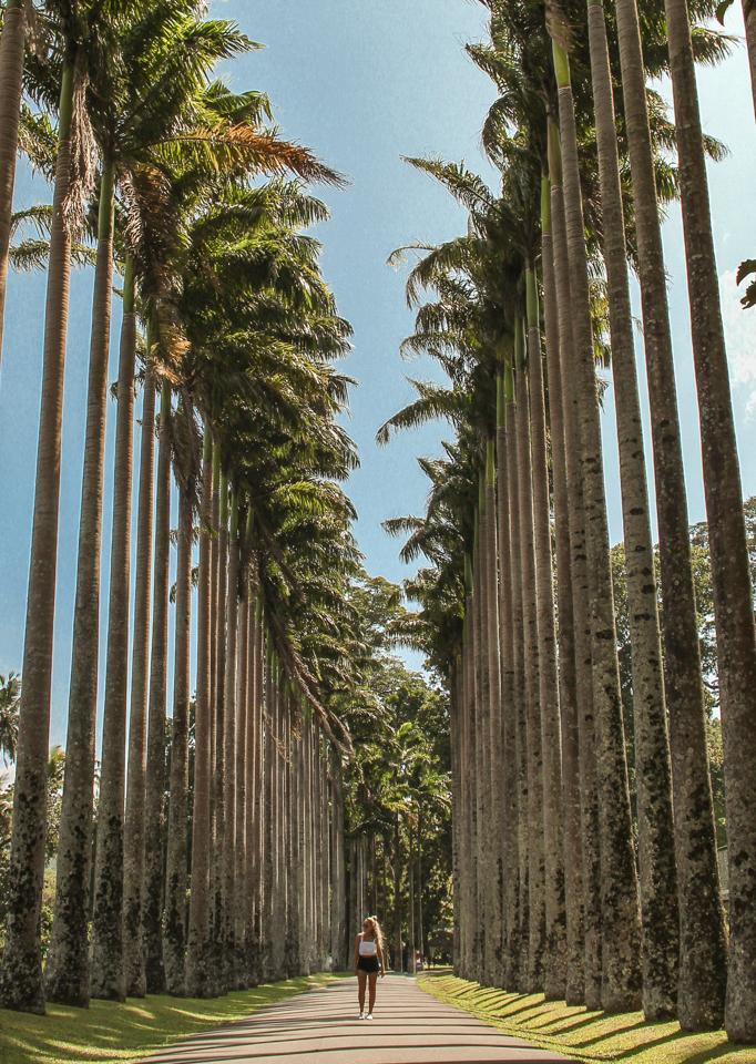 Dreaming of elsewhere peradeniya botanical gardens sri lanka