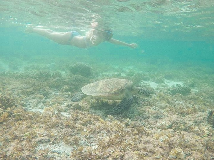spellbound travels sea turtle moalboal