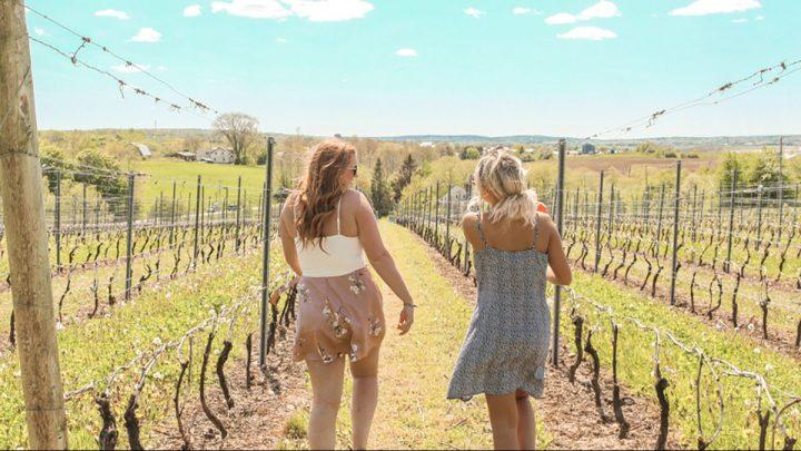Ultimate Nova Scotia Winery Tour – Budget Friendly
