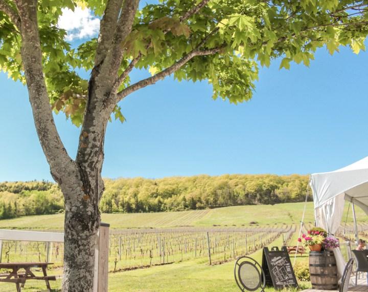 spellbound travels gaspereau vineyards nova scotia