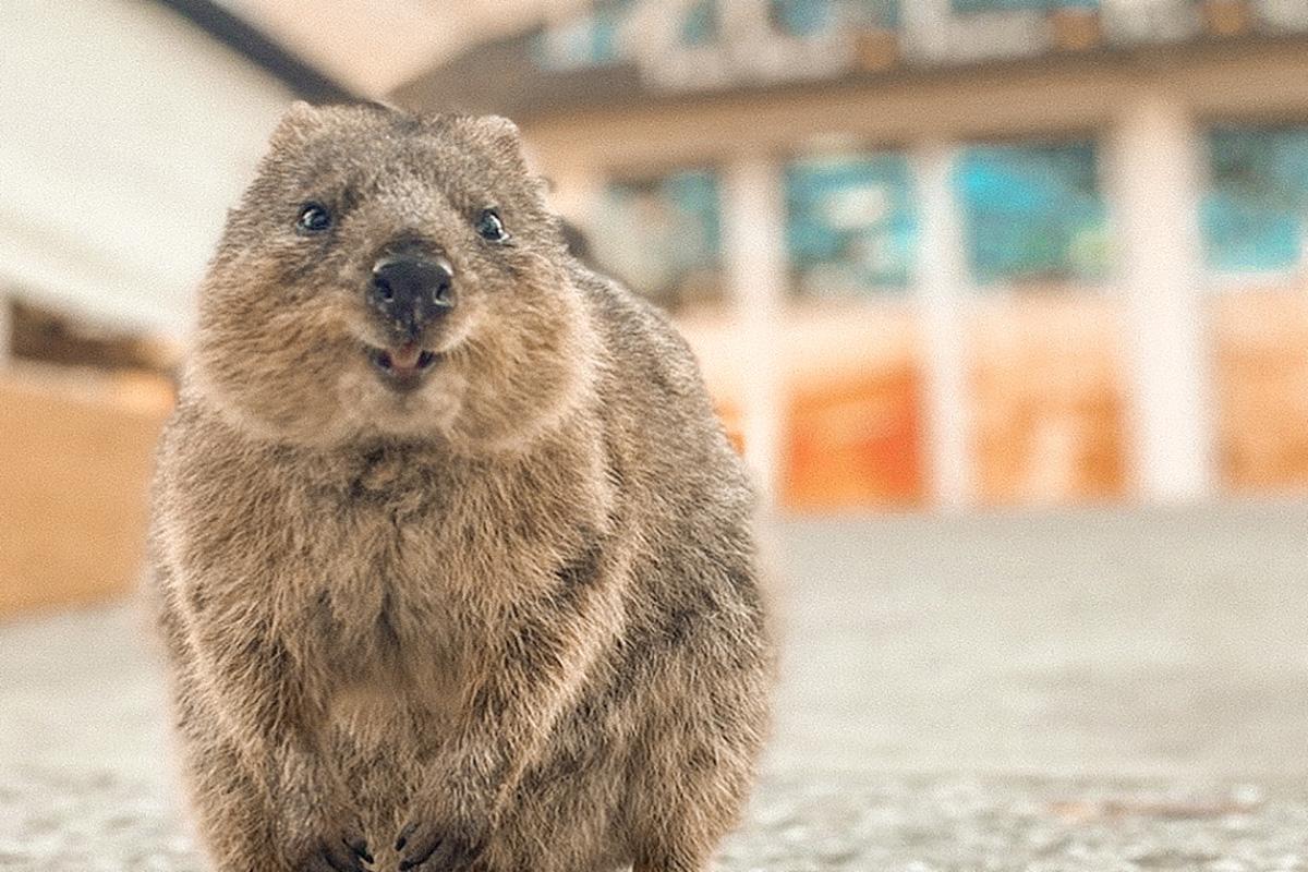 Rottnest Island Guide – Get a Perfect Quokka Selfie