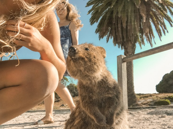spellbound travels quokka