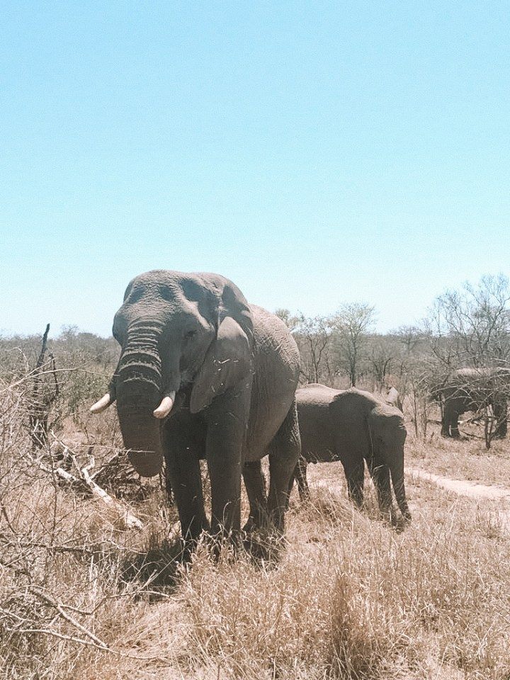 spellbound travels south africa elephants