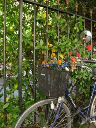 Flowers in bicycle by Institut Curie