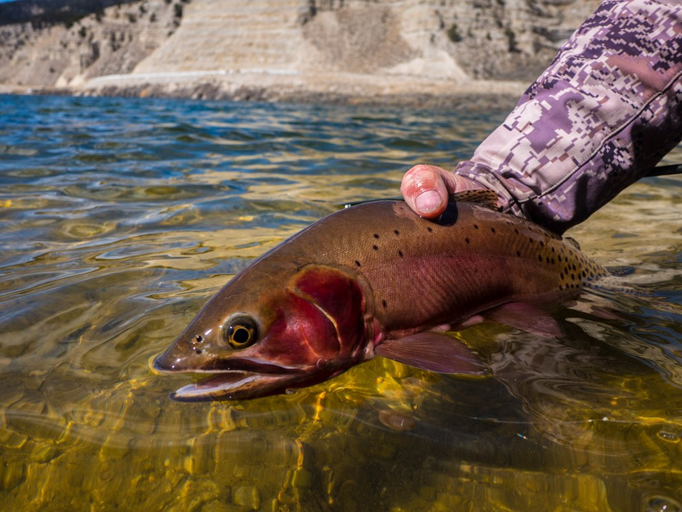 fly fishing utah cutthroat trout