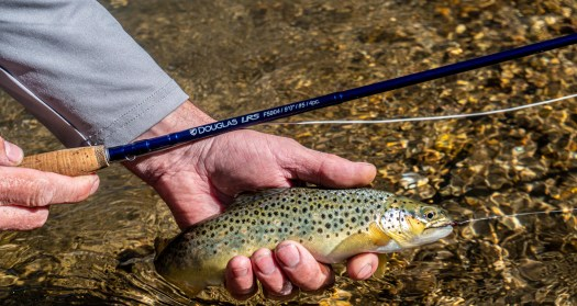 douglas outdoors lrs fly rod with brown trout