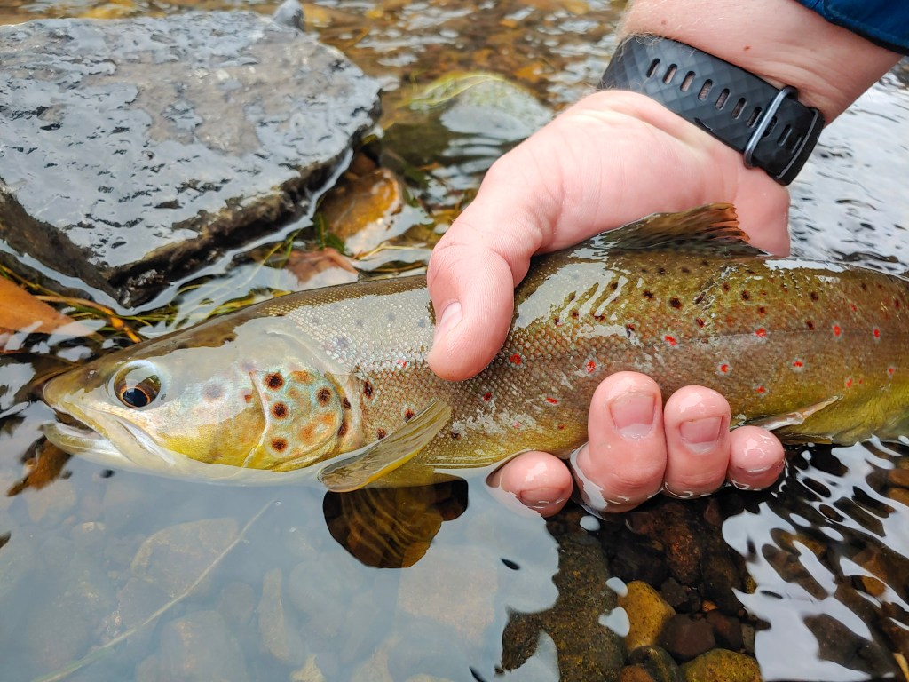 5 Trout Fishing Tips You Can Use Right Now