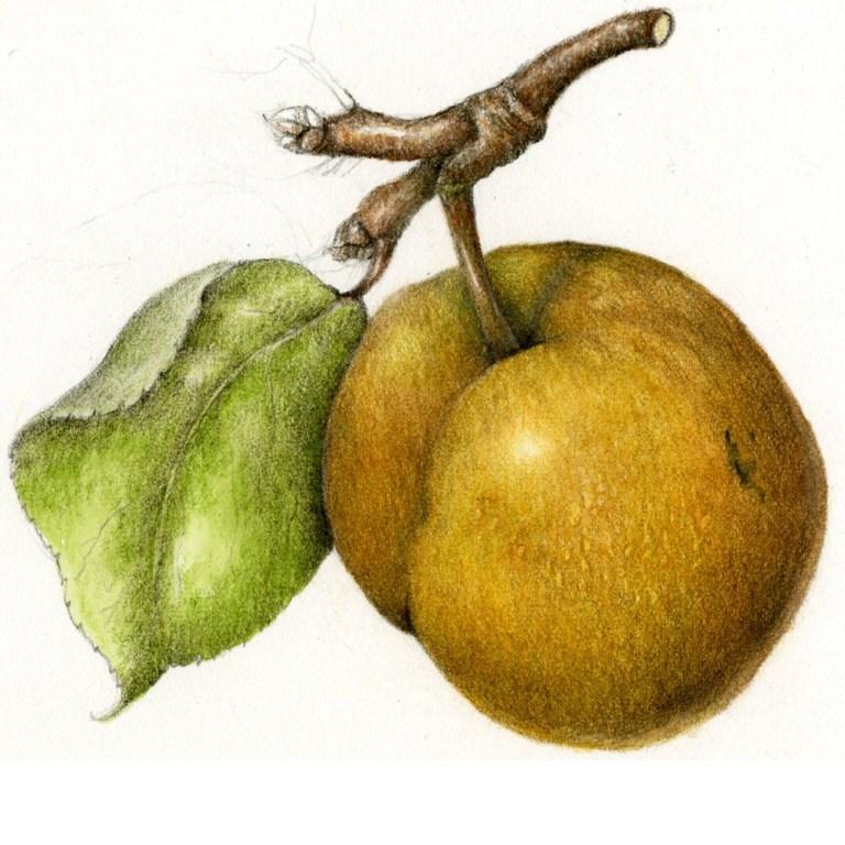 Botanical Art and Illustration Show