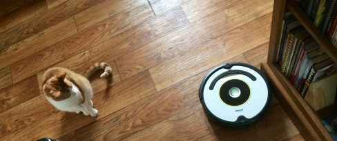 Biscotti checking out the Roomba