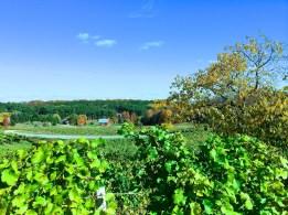 I dream of vineyards
