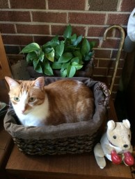 Biscotti's canned food is underneath him in this basket.